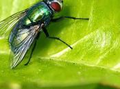 Compost: olores moscas
