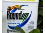 "OMS: RoundUp ""probablemente"" cause cáncer humanos"