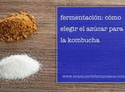 Fermentación: Cómo elegir azúcar para kombucha