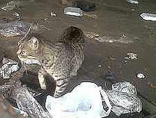 gatos abandono