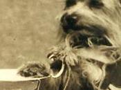 Rememorando XXXVIII: yorshire héroe guerra