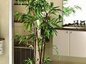 plantas para baño según Feng Shui