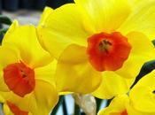 Forzar floración bulbos