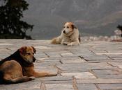 Perros callejeros Atenas, funcionarios griegos