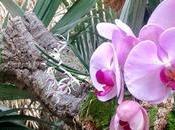 Jardín Botánico-Orquidario Estepona