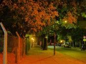copa otoño