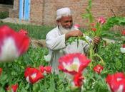 Misión cumplida Afganistán: heroína para Mundo