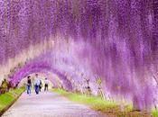 visitar Japón