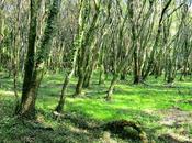 "MAGIA BOSQUES"": ¡visita bosques excepcionales, Isla Cortegada Jardín Saleta!"
