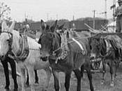 conductor mulas