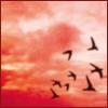 Nubes kétchup, Annabel Pitcher