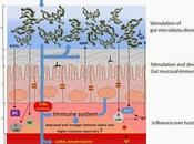Microbiota intestinal ejercicio