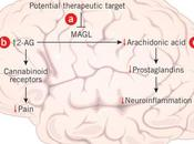 MAGL esclerosis múltiple