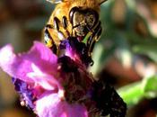 Pesticidas, adicciones drogas abejas