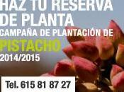 Campaña plantación planta pistacho 2014-2015