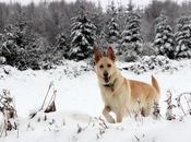 Cebreiro: nieve diversión bajo cero.