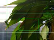 DslrDashboard para Wifi Nikon