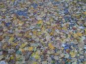 alfombra entrada