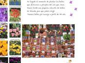Maravillosos bulbos primavera