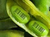 negocios tóxicos impulsarían fusión entre Monsanto Syngenta