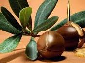 Aceite argán, líquido marroquí
