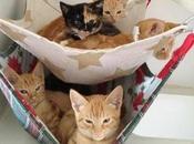 comodidad gatos