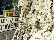 ¿Conoces historia Avène?