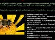 explotación abejas