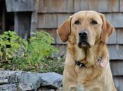 Consejos básicos para dueños perros primerizos