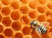 Miel pura adulterada