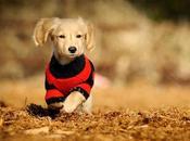 preciosos estilos ropa para perros