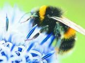 Oslo crean autopista para abejas