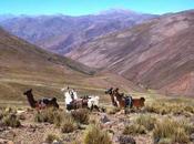 artículos Argentina Live visitados durante Junio 2015.