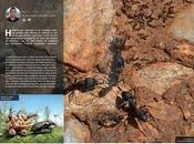 Comunicación entre hormigas... cuestión química.