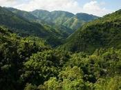 Montañas Azules John Crow Jamaica fueron designadas Patrimonio Mundial