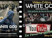 """Vídeo-Crítica """"White God"""", Kornél Mundruczó"""