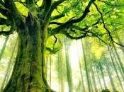 Mitología amerindia: árbol sueño.