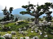 Quien llega vacaciones Calabria encuentra oasis virginidad viejos valores perdido todavía.