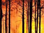 Prevención incendios forestales.