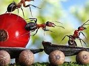 Hormigas bendecidas