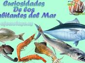 Curiosidades pescados mariscos
