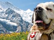 referendum salud: Suiza España