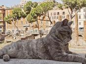 Gatos protegidos, santuario Torre Argentina (Roma)