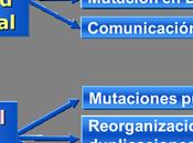 Técnica para evitar enfermedades mitocondriales