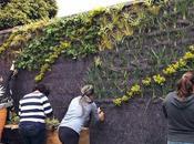 Jardín vertical botánico Bogotá, Colombia