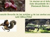 #ecochiquilladas
