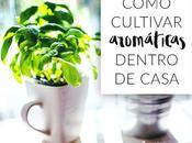 Cómo cultivar hierbas aromáticas dentro casa