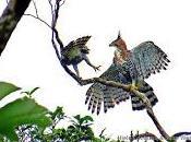 Bijagua Upala -Especies Albergue Tierras Altas-