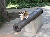 Gatos profesionales Antonio (Texas)