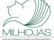 Entrevista Milhojas Ecopapelería: papelería ecológica